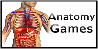 Anatomy Games