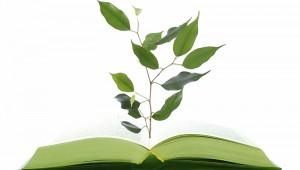 التعليم الأخضر