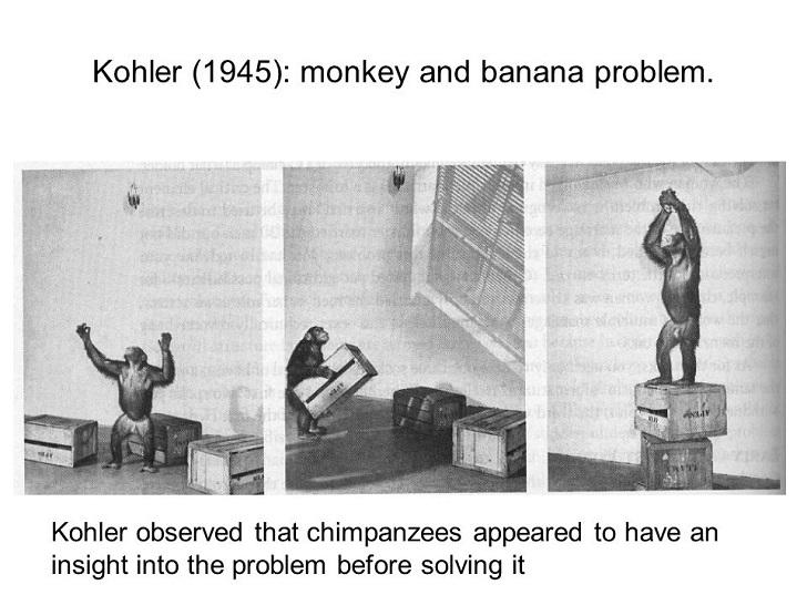 Kohler A   Kitchen Faucet