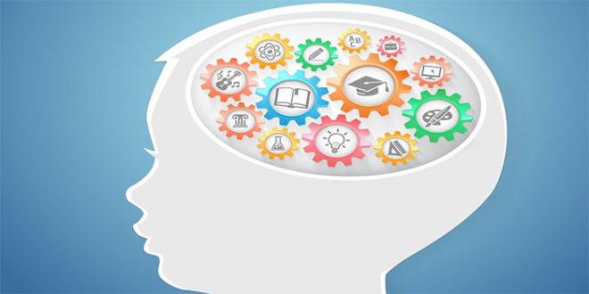 تعلم الدماغ