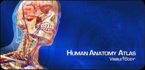 تشريح جسم الانسان